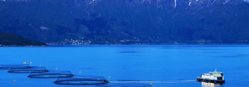Industrialisert havbruk den 5. mai – ESRA gjester Ocean Week
